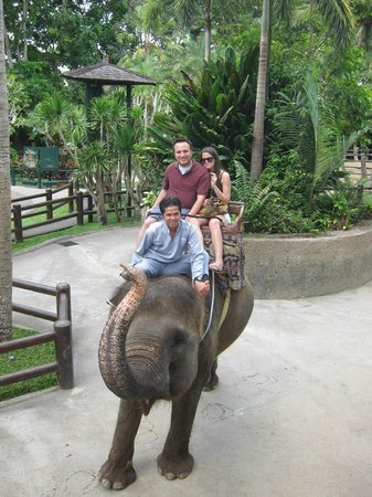 Agus Bali Private Tours: Elephant Ride