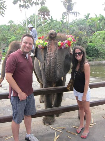 Agus Bali Private Tours: Elephant Park