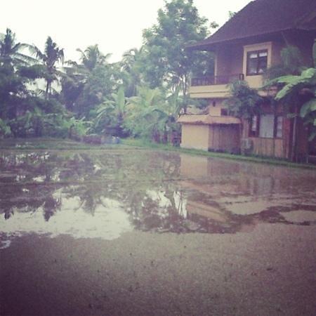 Bayu Guest House: vue de notre bungalow sur rizière