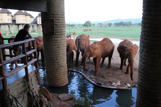Big 7 Kitheka Safaris Day Tours