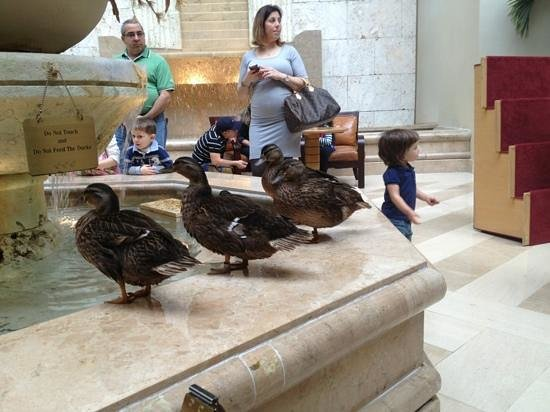 Hyatt Regency Orlando: the ducks