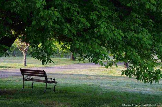 Misty Glen Wines: A shady place to sit
