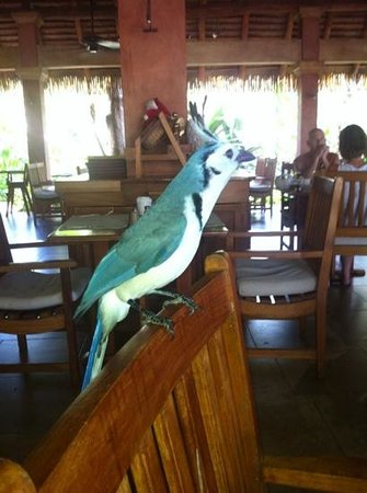 Capitán Suizo Beachfront Boutique Hotel: bird at the restaurant