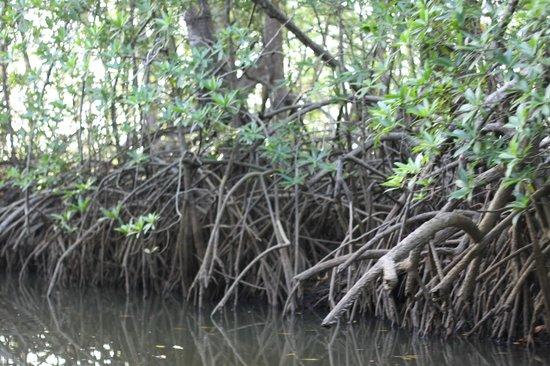 هوتل لاجونا مار: Touring the mangroves 