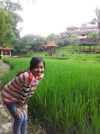 Padi City Resort: The Padi Field