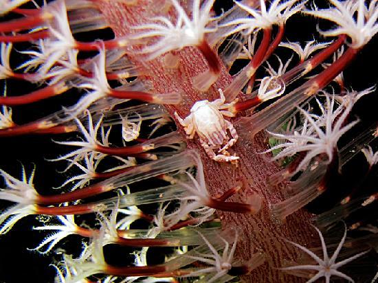 Bali Blue Diving PADI Resort: 1st Prize Photo Contest 2012