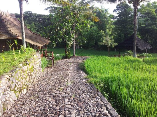 Padi City Resort: Walking area around the Padi field