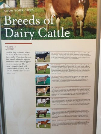 Turkey Hill Experience: Breeds of dairy cattle