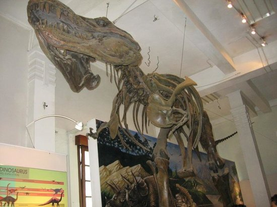 Museum Geologi: Foto tirex