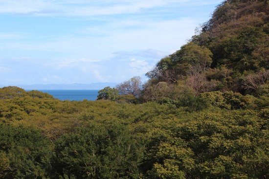 Hotel Riu Guanacaste: We enjoyed looking out our balcony to glimpse the ocean and spot the monkeys