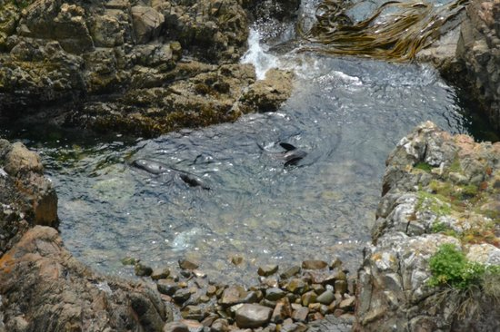 Nugget Point: Seals in the pool