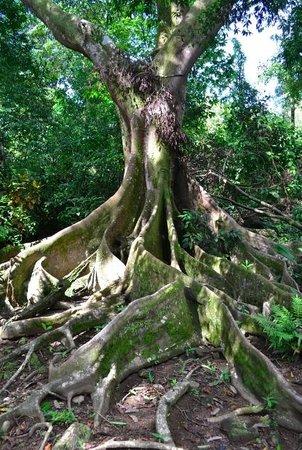 Tucan Terra: Beautiful tree right in Van's backyard!