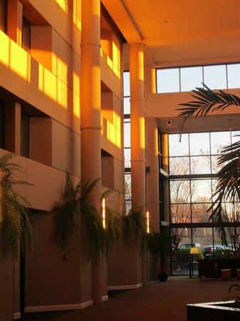 Sheraton Charlotte Airport Hotel: Main Lobby