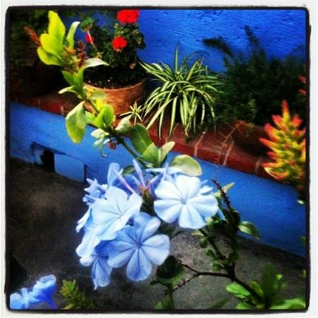 The Yellow House : flowers on terrace