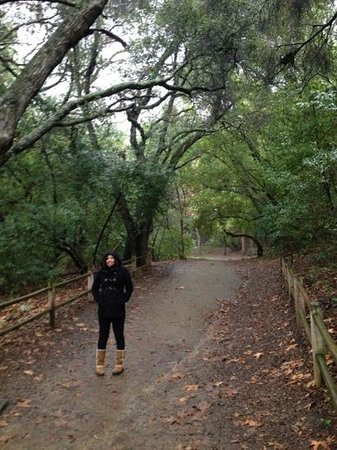 Nojoqui Falls Park: What most of the trail looks like.