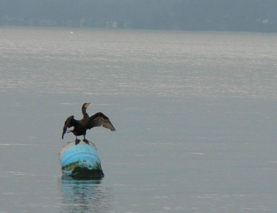 Discovery Park: cormorant off the North Beach