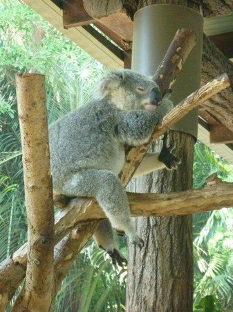 Monaco: At nearby Australia Zoo