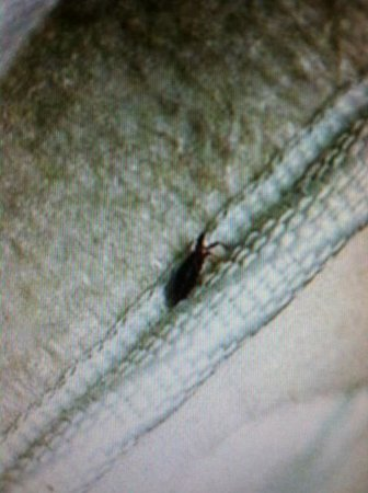 East Stroudsburg, Пенсильвания: DISGUSTING bugs in mattress at Shawnee Wyndham