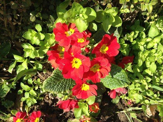 Swissotel The Bosphorus: pretty flowers in bloom