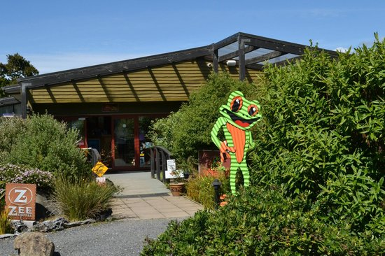 Catlins Kiwi Holiday Park at McLean Falls : The Whistling Frog