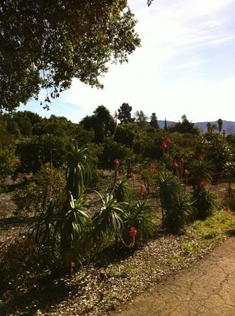 Ventura Ranch KOA: the campground is surrounded by classic Calif orange, lemon & avocado orchards.