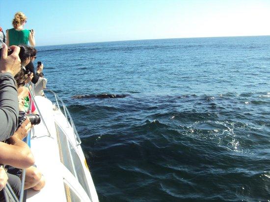 Whale Watchers Hermanus: Whale Watchers boat, Hermanus
