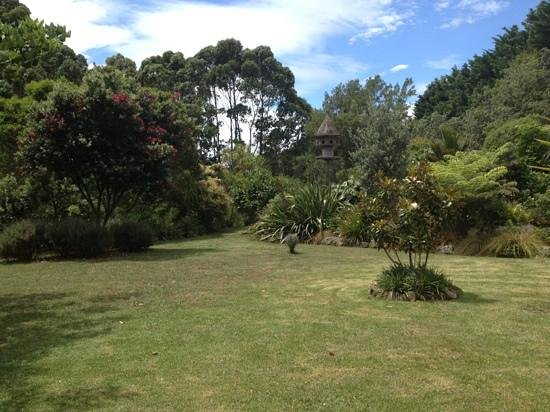 Fossil Bay Lodge: lawn