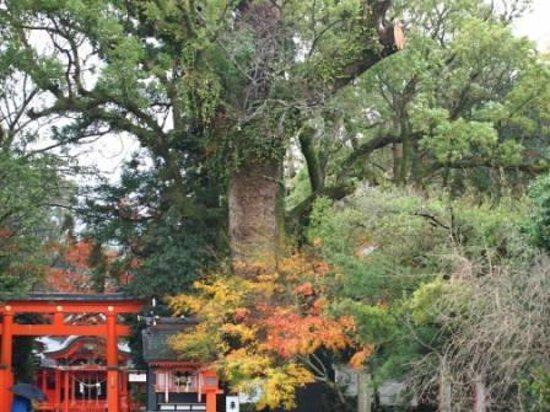 Ibusuki Japan  city photos : Hiraki Shrine Ibusuki, Japan omdömen TripAdvisor