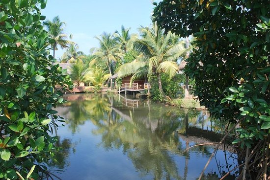 Cherai Beach Resorts: The backwaters