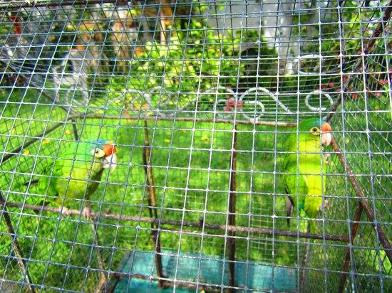 Hotel El Jardin de Lolita: exotic birds