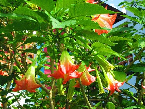Hotel El Jardin de Lolita: more flowers
