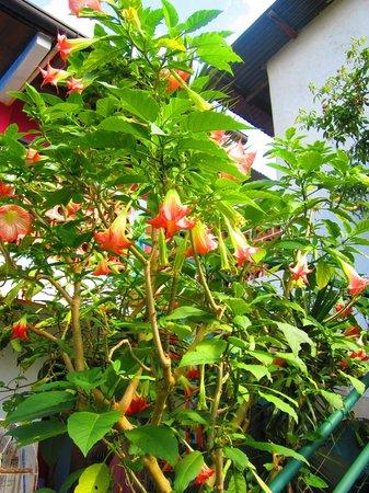 Hotel El Jardin de Lolita: flowers in the garden