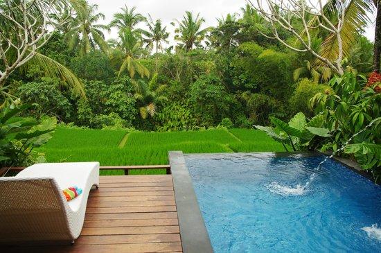 Ubud Green: terrasse avec piscine privée