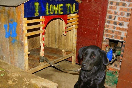 Yangshuo En Attendant Godot's Hostel: hostel's dog