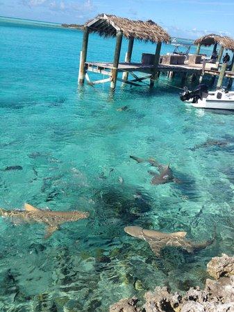 Island World Adventures: Feed the sharks!