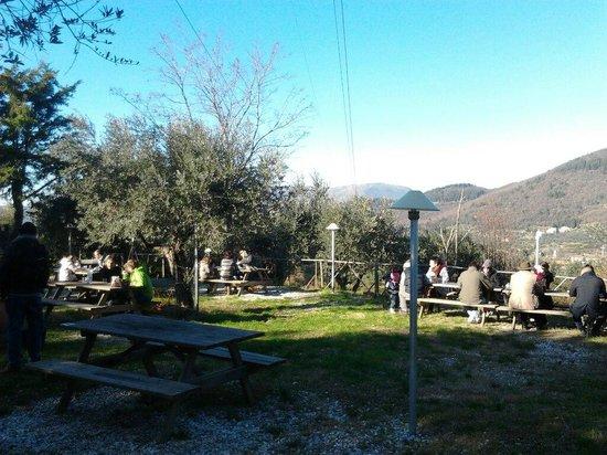 Botteghina di Morello: L'uliveto con i tavoli all'aperto