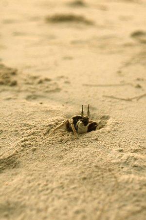 Mari Mari Mantanani Backpacker Lodge: hunting crabs at sunset