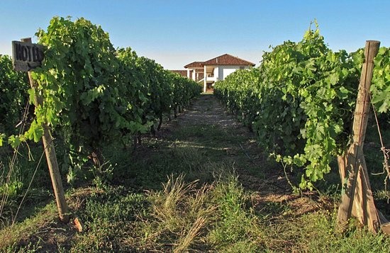 Hotel TerraVina: through the vines to Vino Bello restaurant