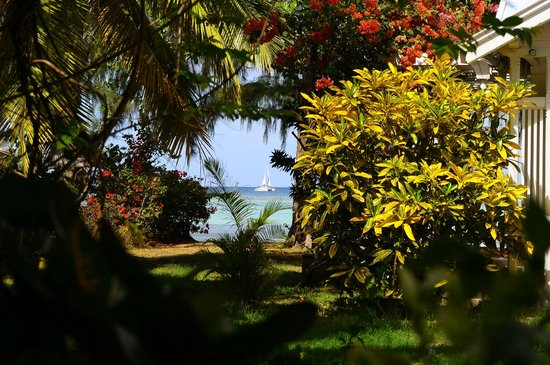 Les Lataniers Bleus: Blick vom Garten ans Meer