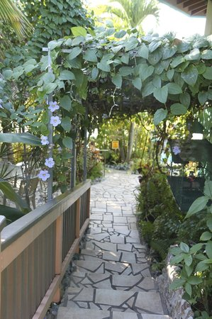 Lazy Parrot Inn: charming walk down to pool