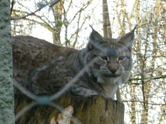 Tierpark Hellabrunn: Natale allo zoo