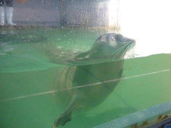 Ise Sea Paradise (Ise Meotoiwa Interactive Aquarium): アシカチャン