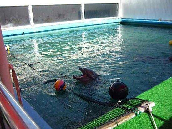 Ise Sea Paradise (Ise Meotoiwa Interactive Aquarium): イルカチャン