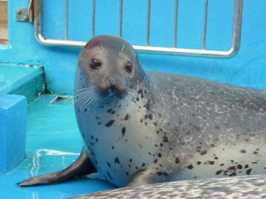 Ise Sea Paradise (Ise Meotoiwa Interactive Aquarium): ゴマチャン