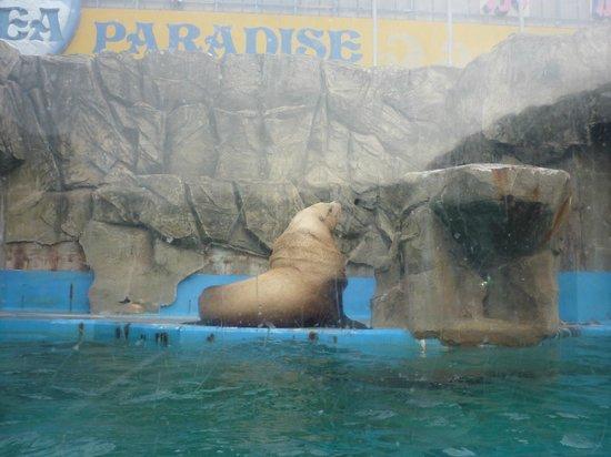 Ise Sea Paradise (Ise Meotoiwa Interactive Aquarium): トドチャンのお見送りw