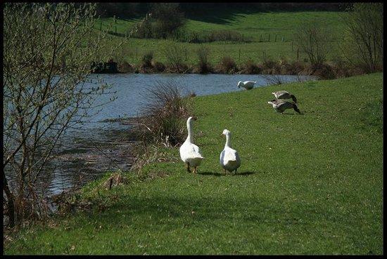 l'étang du parc du chateau de la Flocelliere