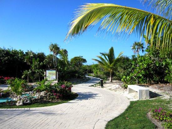 Royalton Cayo Santa Maria: Chemin pour la plage