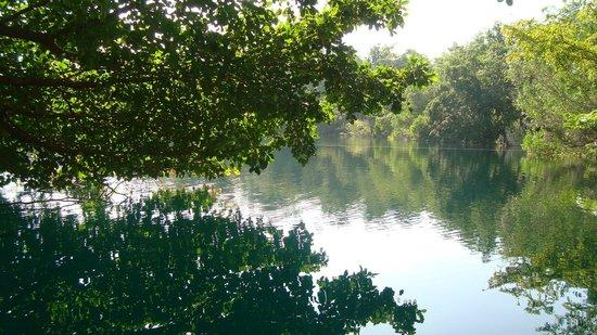 Restaurante Cenote Azul: Vista hacia el Cenote