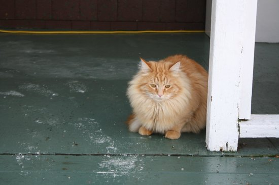 The Farmhouse Bed and Breakfast: Pumpkin, the sweet house cat
