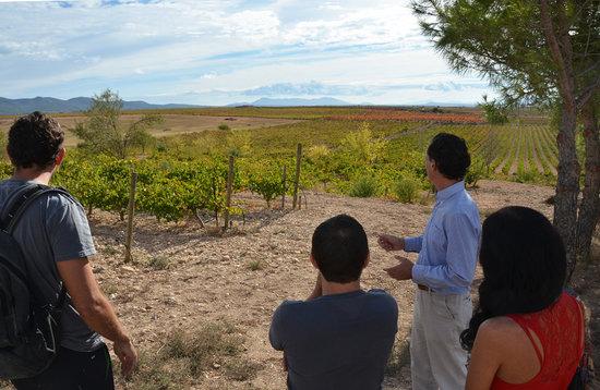 Wine Tour Valencia: The fabulous vineyard